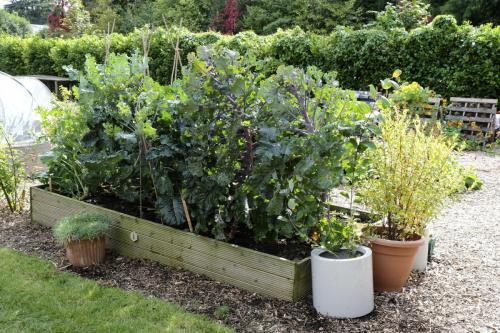 SCC-Patchworking-Garden-Project-HRH-Duke-of-Gloucester-visit-011